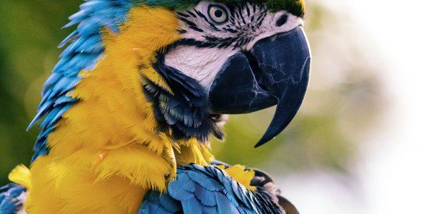 Nyt kæledyr: Fuglesang og masser af farver